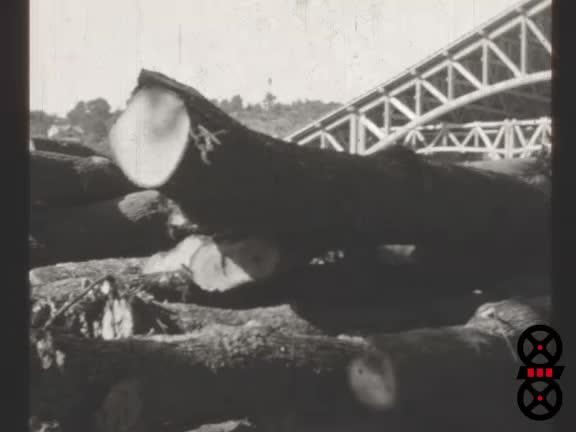 Exposition internationale du bois à Lyon