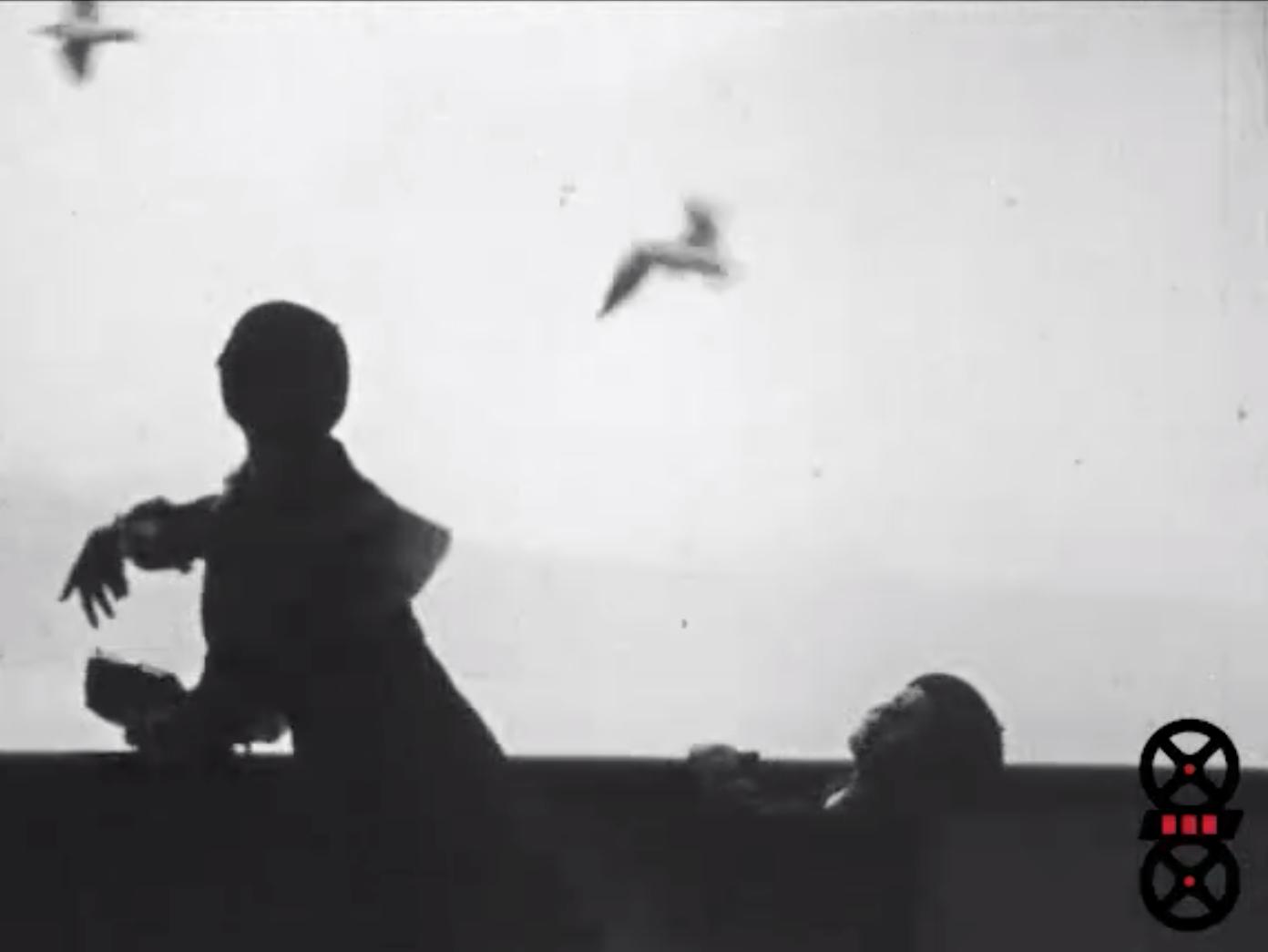 Vols de mouettes sur le Léman