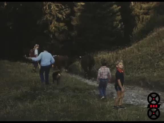 Concours agricole à Megève
