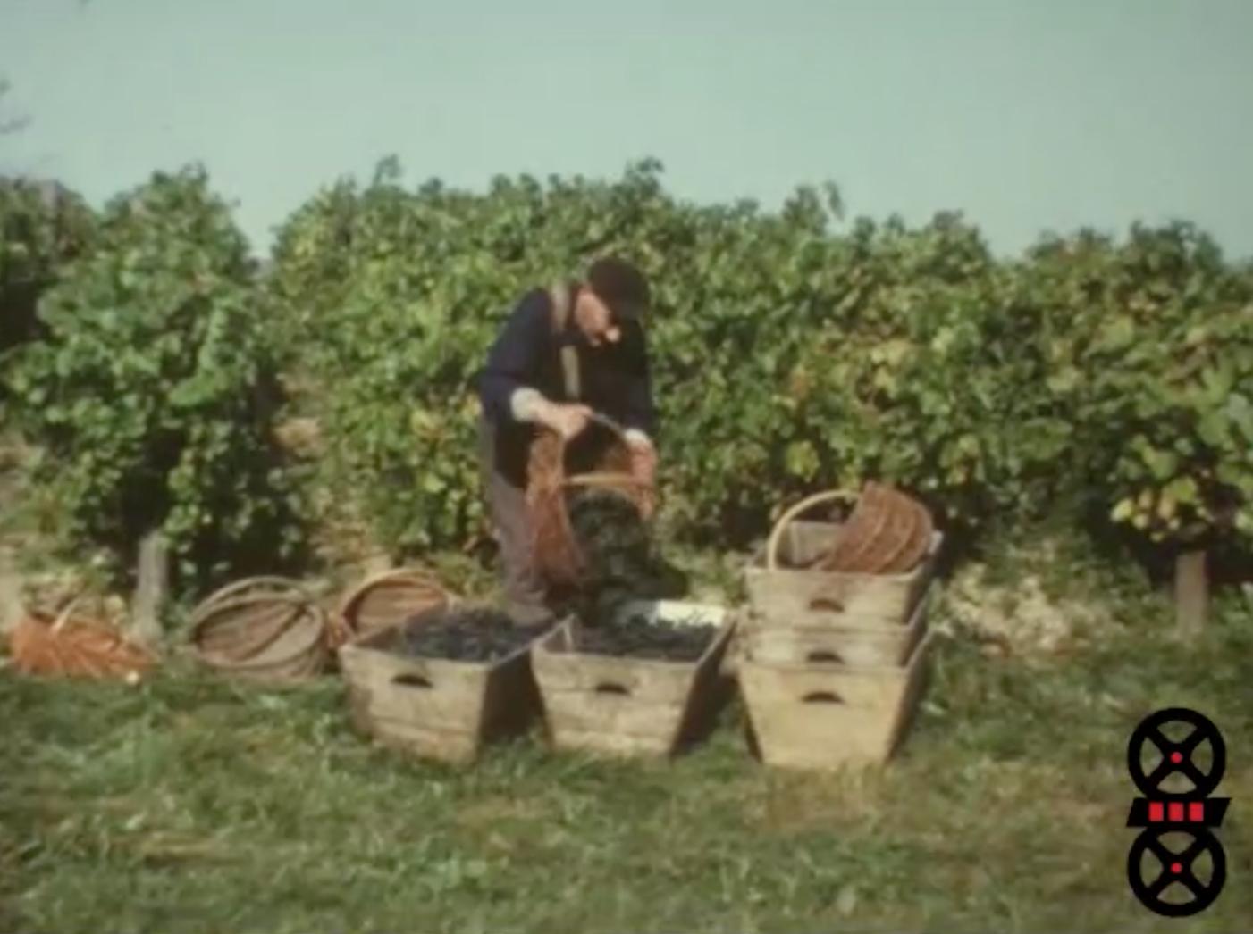 Moissons, vendanges, Pommes de terre
